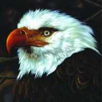Hawk Is Howling
